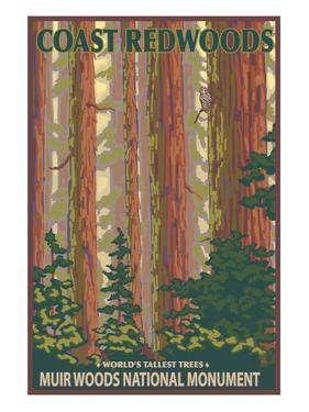 Muir Woods National Monument, California - Forest View by Lantern Press