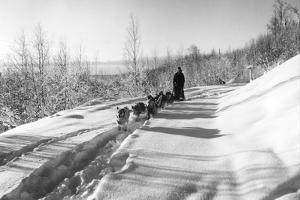 Mushing a Dog Sled in Alaska Photograph - Alaska by Lantern Press