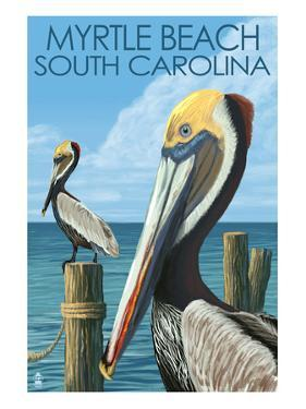 Myrtle Beach, South Carolina - Pelicans by Lantern Press