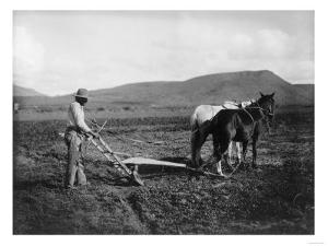 Native American Plowing His Field Photograph - Sacaton Indian Reservation, AZ by Lantern Press