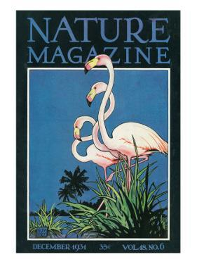 Nature Magazine - View of a Pair of Flamingos, c.1931 by Lantern Press