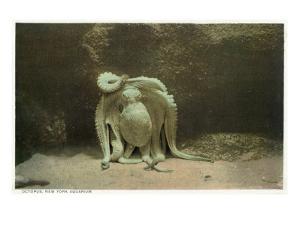 New York City, New York - Octopus at the Aquarium by Lantern Press