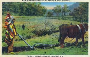 North Carolina - Cherokee Farmer with Ox-Drawn Plow by Lantern Press