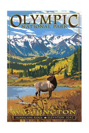 Olympic National Park - Hurricane Ridge by Lantern Press