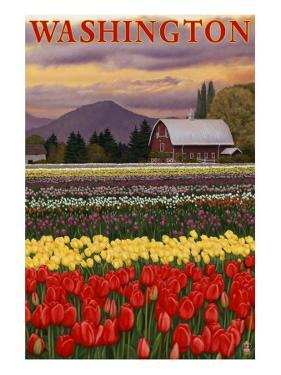 Orca and Calf - Tulip Fields by Lantern Press