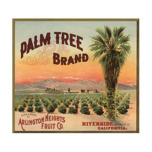 Palm Tree Brand - Riverside, California - Citrus Crate Label by Lantern Press