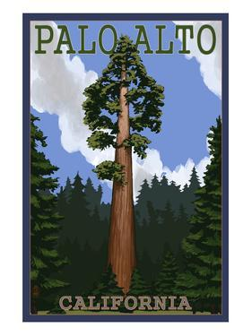 Palo Alto, California - California Redwoods by Lantern Press