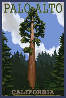 Palo Alto, California - California Redwoods by Lantern Press