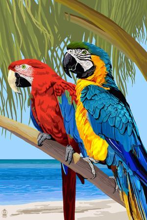 Parrots by Lantern Press