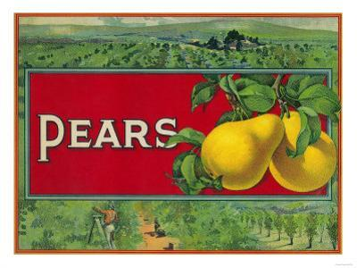 Pear Stock Crate Label by Lantern Press