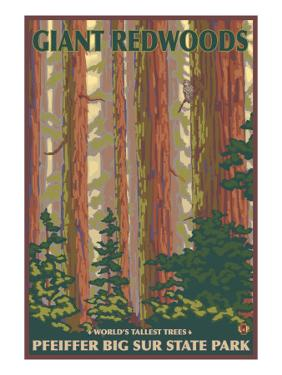 Pfeiffer Big Sur State Park, California - Giant Redwoods by Lantern Press