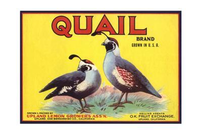 Quail Brand - Upland, California - Citrus Crate Label by Lantern Press
