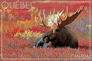 Quebec, Canada - Bull Moose in Flowers by Lantern Press