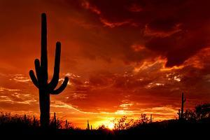 Red Sunset and Cactus Photograph by Lantern Press