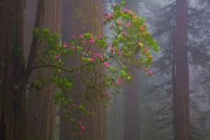 Redwood Forest by Lantern Press