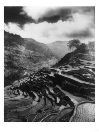 Rice Terraces in the Philippines Photograph - Philippines by Lantern Press