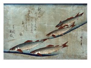 River Trout, Japanese Wood-Cut Print by Lantern Press
