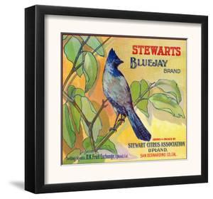 San Bernardino, California, Stewarts Bluejay Brand Citrus Label by Lantern Press