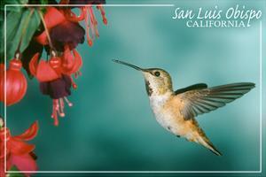 San Luis Obispo, California - Rufous Hummingbirds by Lantern Press