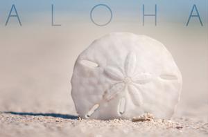 Sand Dollar on Beach - Aloha by Lantern Press