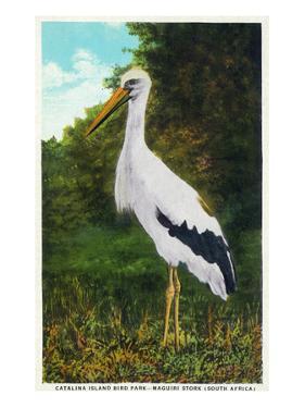 Santa Catalina Island, California - Bird Park, View of a Maguiri Stork by Lantern Press