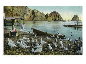 Santa Catalina Island, California - View of Sea Gulls at Avalon by Lantern Press