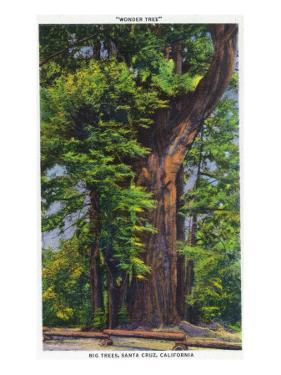 Santa Cruz, California - Big Tress Park, The Wonder Tree by Lantern Press