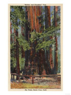 "Santa Cruz County, CA - ""Mother"" & ""Daughter"" at Big Trees Park by Lantern Press"