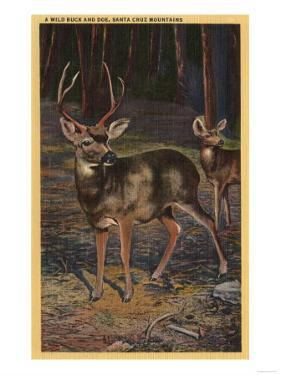 Santa Cruz Mountains, California - View of a Wild Buck & Doe by Lantern Press