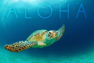 Sea Turtle Swimming - Aloha
