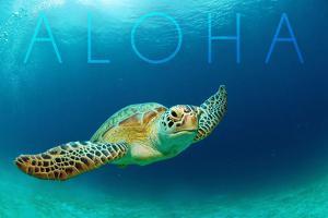 Sea Turtle Swimming - Aloha by Lantern Press