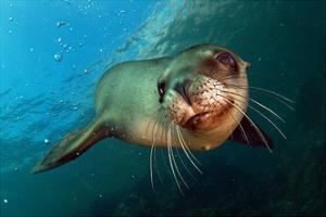 Seal Up Close by Lantern Press