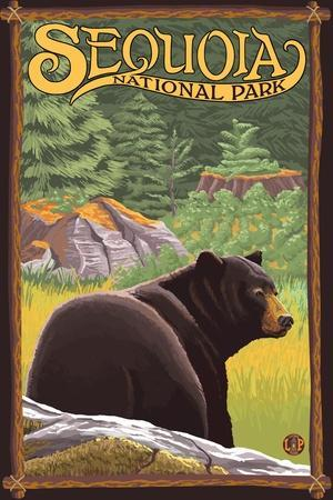 Sequoia Nat'l Park - Bear in Forest - Lp Poster, c.2009