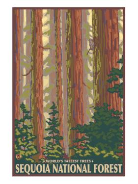 Sequoia National Forest, CA Redwood Trees by Lantern Press