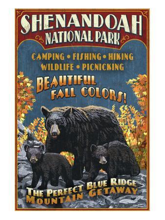 Shenandoah National Park, Virginia - Bear and Cubs by Lantern Press