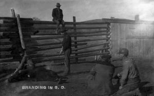 South Dakota - Branding Cattle Scene by Lantern Press