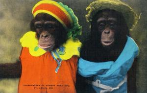 St. Louis, Missouri - Forest Park Zoo Chimpanzees in Costume by Lantern Press