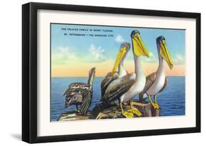 St. Petersburg, Florida, View of a Pelican Family in Sunny Florida by Lantern Press