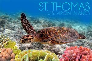 St. Thomas, U.S. Virgin Islands - Sea Turtle and Coral by Lantern Press