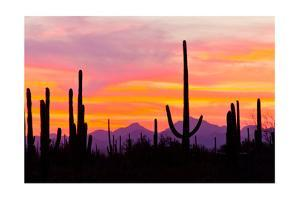 Sunset and Cactus Photograph by Lantern Press