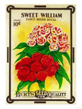 Sweet William Seed Packet by Lantern Press