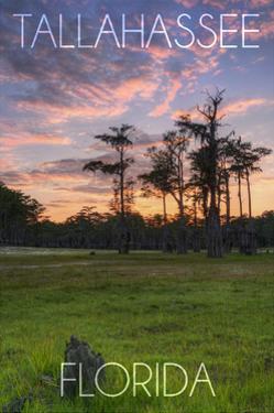Tallahassee, Florida - Cypress and Sunset by Lantern Press
