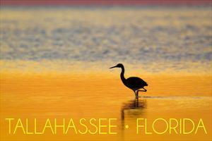 Tallahassee, Florida - Golden Heron by Lantern Press