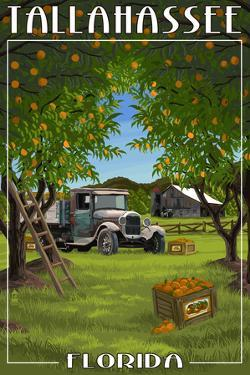 Tallahassee, Florida - Orange Grove and Truck by Lantern Press