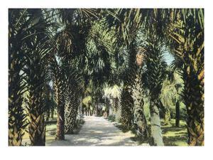 Tampa, Florida - View of Palmetto Walk by Lantern Press
