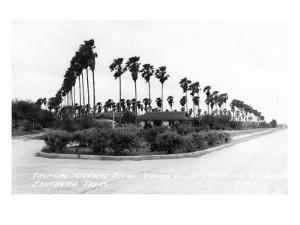 Texas - Palms along the Highway in Lower Rio Grande Valley by Lantern Press