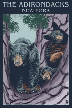 The Adirondacks, New York State - Bear Family in Tree by Lantern Press