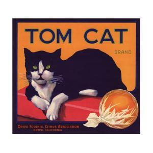 Tom Cat Brand - Orosi, California - Citrus Crate Label by Lantern Press