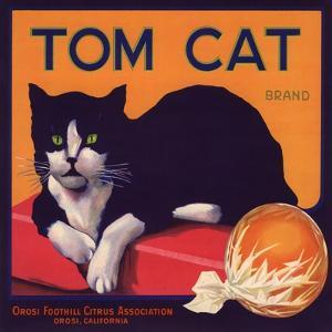 Tom Cat Brand - Orosi, California - Citrus Crate Label by Lantern Press