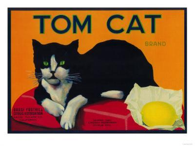 Tom Cat Lemon Label - Orosi, CA by Lantern Press